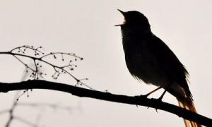 bird202e